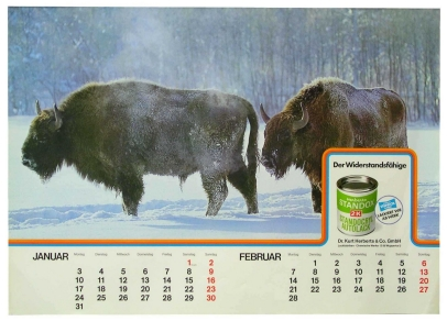 Robust and impervious: one of the early calendar images of 1977